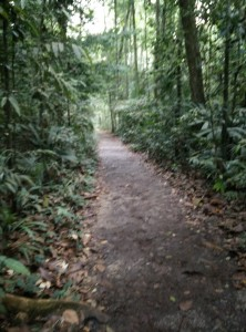 Example of the nature trek, surrounded by jungle